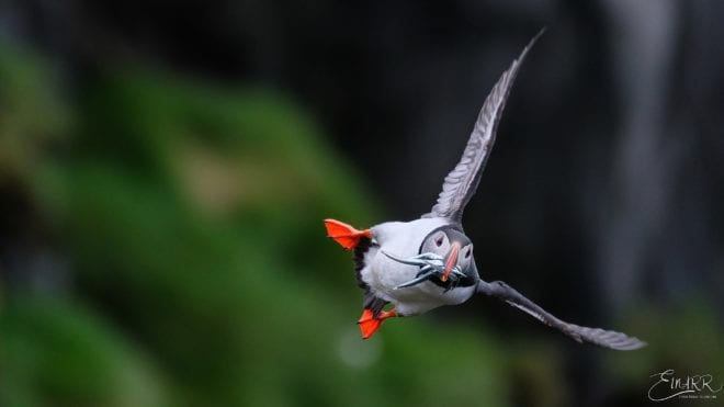 Puffin Tour, Vatnajokull, National Park, ice lagoon